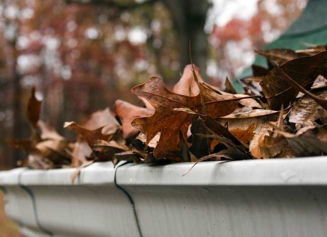 5 Pests That May Be Living in Your Gutters—And What You Can Do About It
