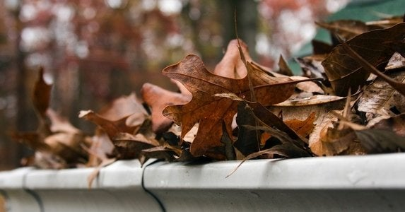 Pests-in-gutters