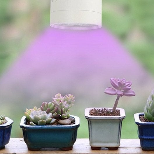 7 Ways to Buy Yourself a Green Thumb for Under $40