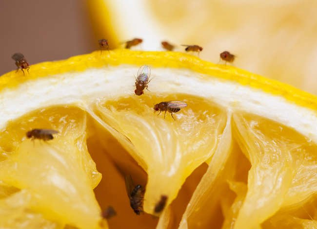 10 Bugs That Are Living in Your House—and How to Get Them Out!