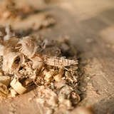 10 Surprising Things You Can Do with Sawdust