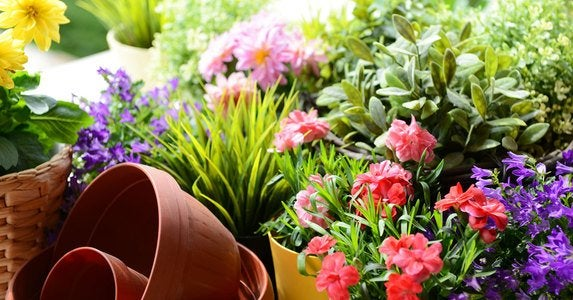 Flower pot garden