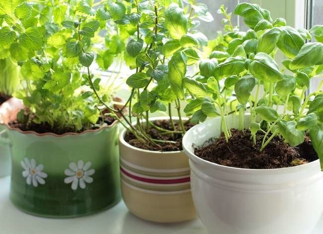 12 Easy Herbs to Grow on Your Windowsill