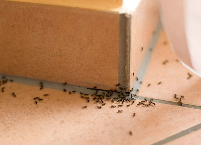 8 Things the Exterminator Won't Tell You for Free