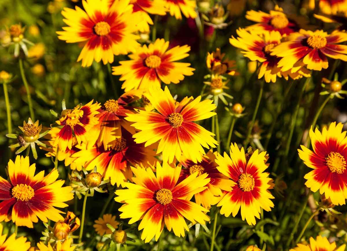 14 Plants That Thrive Even When Temperatures Rise