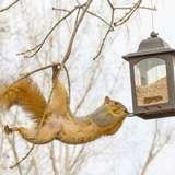 Solved! How to Keep Squirrels Away from Bird Feeders