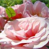Basleetroutman.imagekind.com_bd4df94e-c46d-43a1-8bf9-c059a0a0d2d5_thumbnail