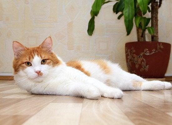 cat bonding behavior