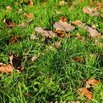 Mulch Fall Leaves
