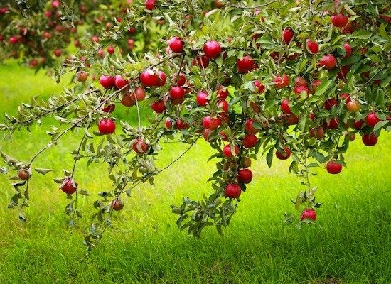 Fall patio ideas 9 ways to stay outdoors longer bob vila - Planting fruit trees in autumn ...