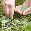How To Plant Grass Seed
