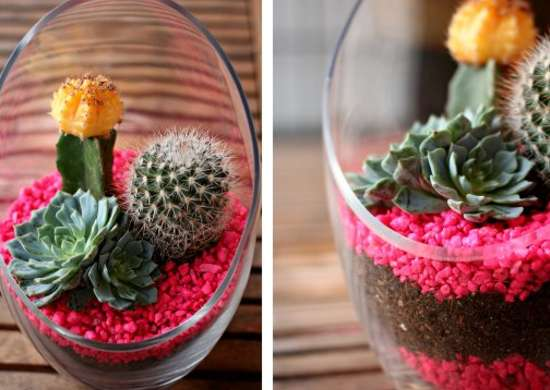 Cactus Terrarium - How to Build a Terrarium