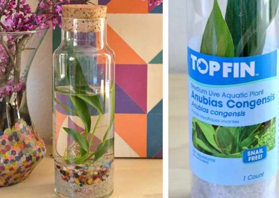 Water-Loving Plants - How to Build a Terrarium
