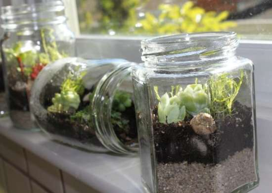 How to Make a Terrarium in a Jar - How to Build a Terrarium