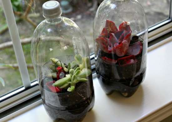 Bottle Terrarium - How to Build a Terrarium