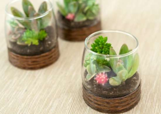 How to Make a Small Terrarium - How to Build a Terrarium