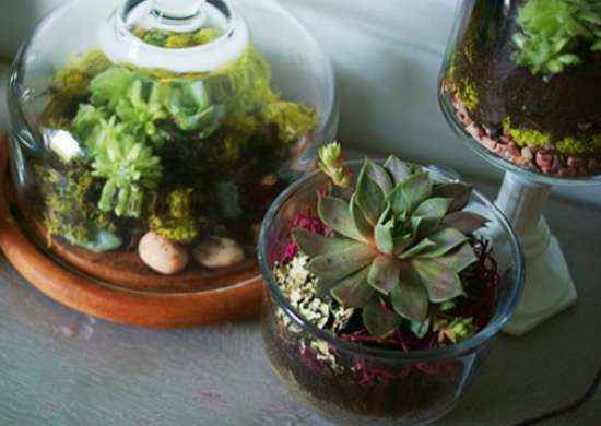 Indoor Garden - How to Build a Terrarium
