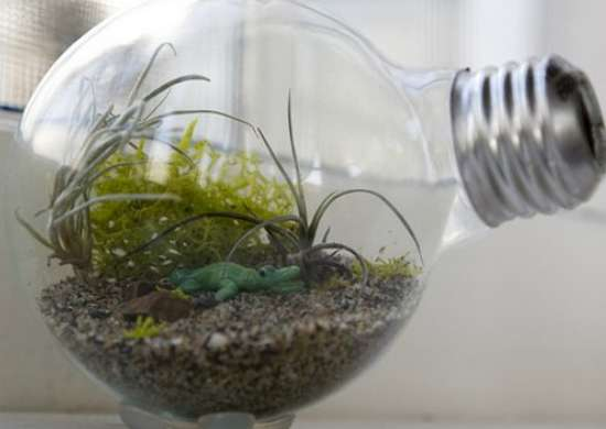 Light Bulb Terrarium - How to Build a Terrarium