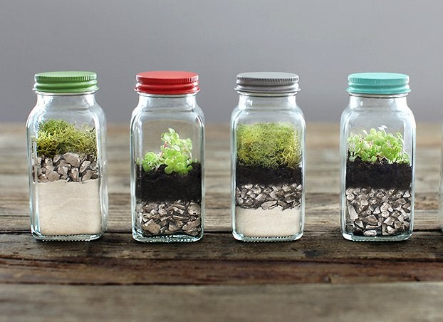 12 Tiny Gardens You Can Grow on a Tabletop