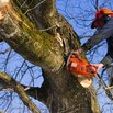 Tree Removal Safety