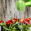 Water Plants Less in Winter