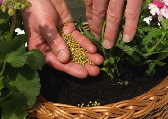 Fertilize Plants Less in Winter