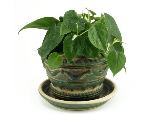 10 Low-Light Houseplants You Can Grow Practically Anywhere
