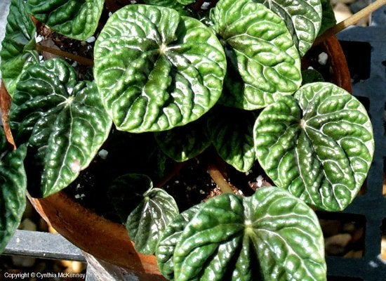 Nice 10 Forgiving Houseplants You Can Grow Anywhere