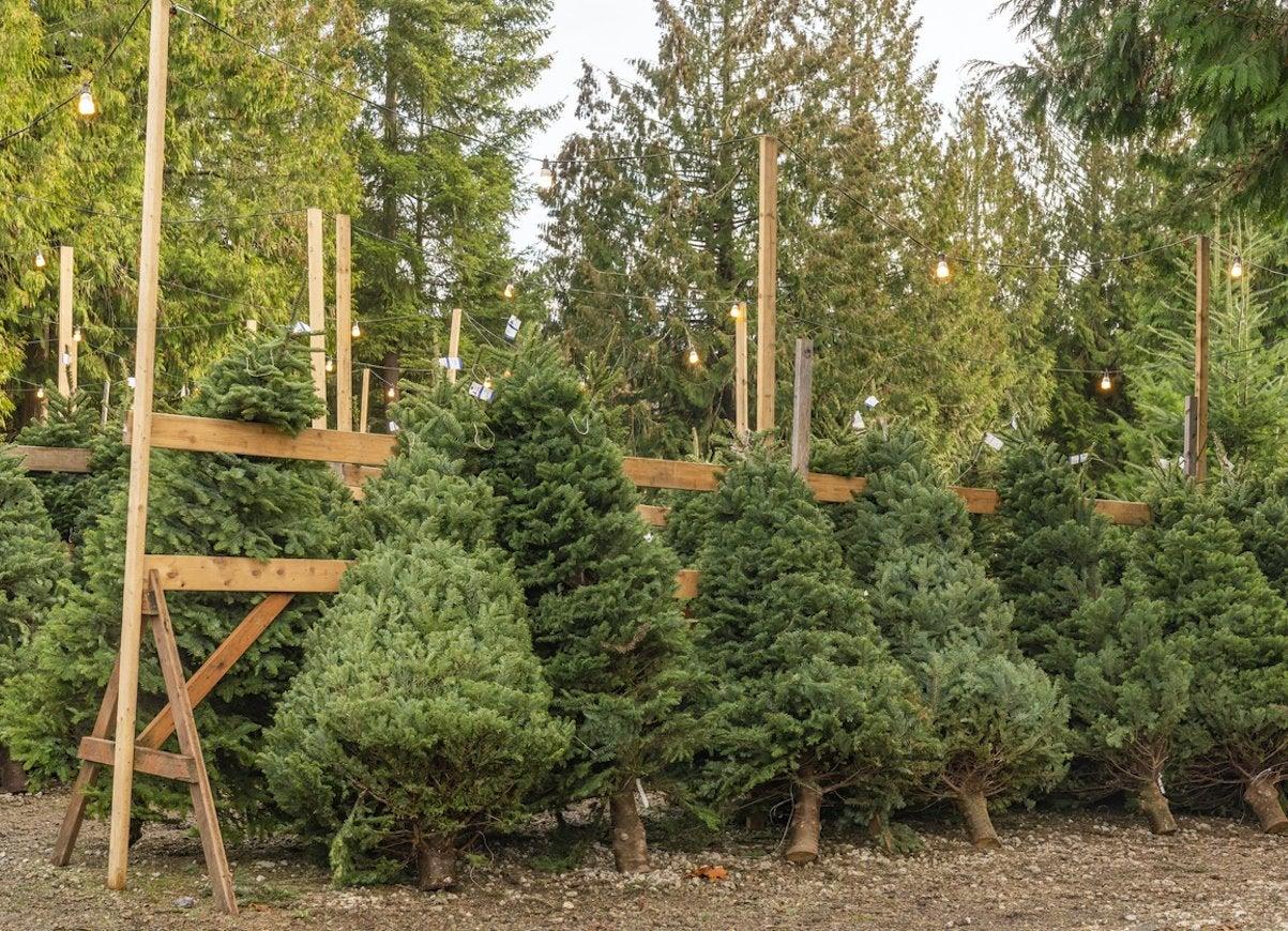 How to Make a Christmas Tree Last Longer - Bob Vila