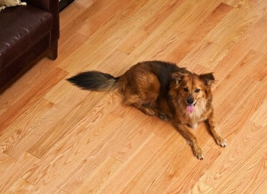 Best Flooring For Dogs Cats And Kids 5 Family Friendly Options