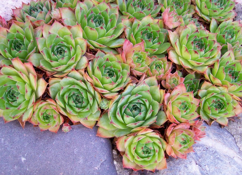 Container Garden Ideas 8 Plants For Your Front Porch Bob Vila