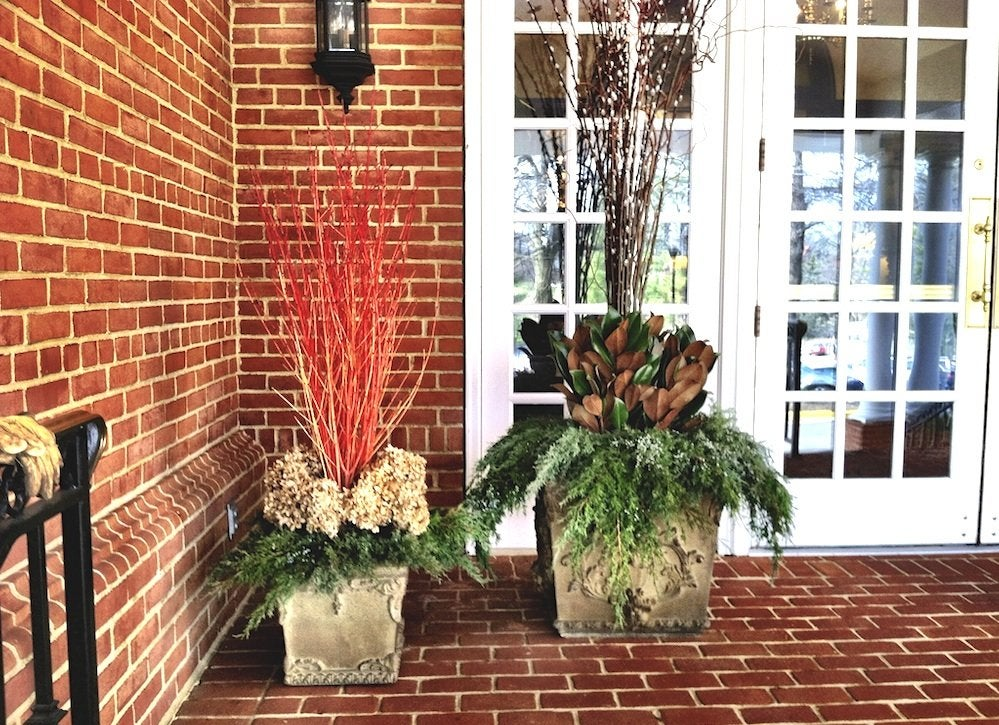 Container Garden Ideas 8 Plants For Your Front Porch
