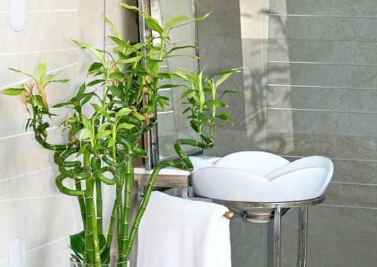 Bathroom Plants - 10 All-Time Favorites - Bob Vila on plants at sam's club, plants at homegoods, plants that repel bugs and pests, plants inside home, plants at ikea, plants under evergreen trees, plants at office depot, plants at michaels, plants with white flowers, plants that repel mosquitoes, vines depot, plants at safeway, plants at disney, plants at kroger, plants at menards, plants at publix, plants at tj maxx, plants at harris teeter, plants at cvs, plants at kmart,