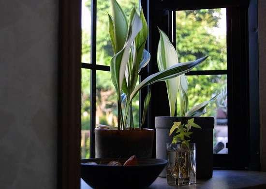Bathroom Plants - 10 All-Time Favorites - Bob Vila