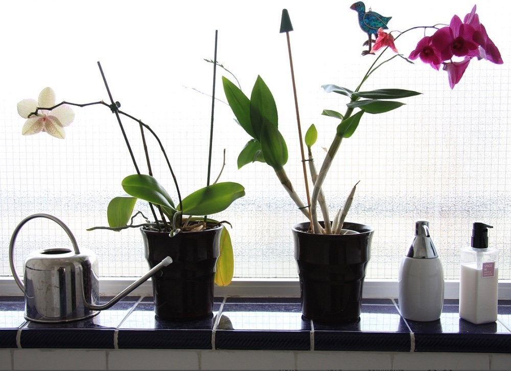 Set Yours On A Bathroom Windowsill The Indirect Sunlight Will Nourish Plant While High Humidity