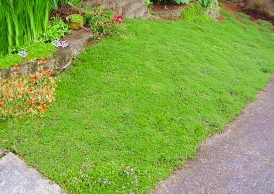 Lawn Alternatives For The Modern Yard: Outdoor Living Spaces