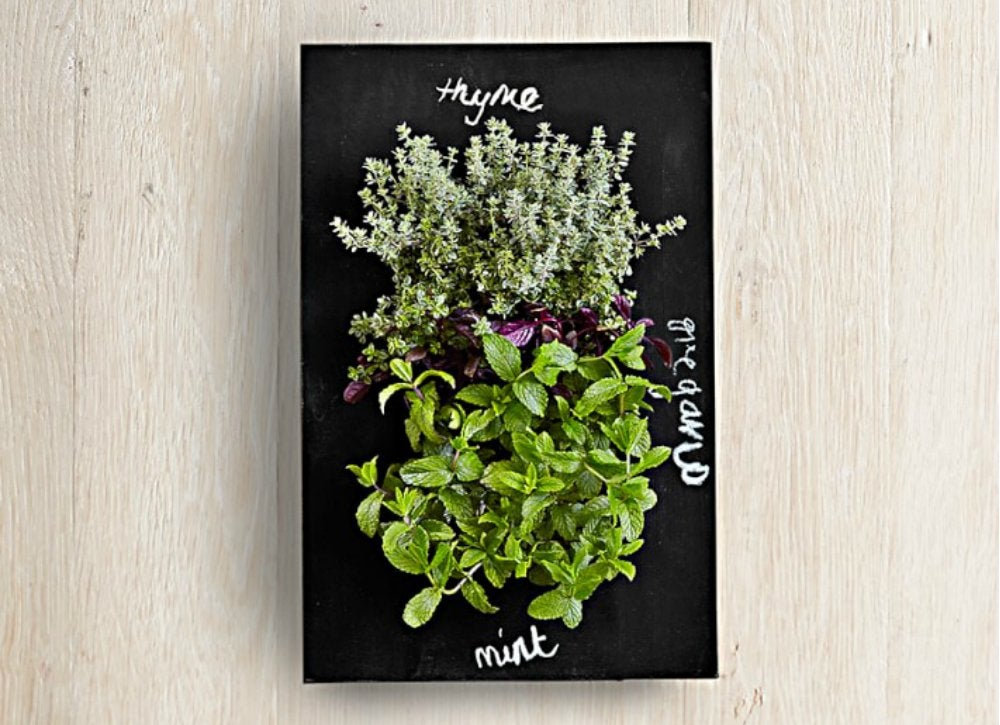 Smartplanter williamssonoma