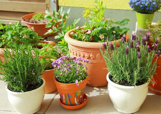 Best Herbs to Grow