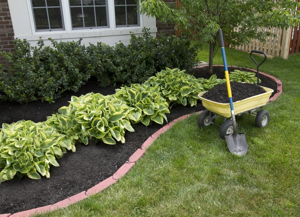 Save water   mulch