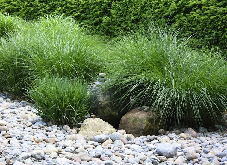 Usda zone low maintenance landscaping 17 great ideas for Grass bushes landscaping