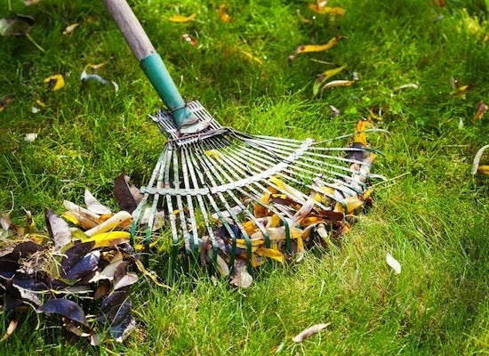 Home_exterior_cleaning_-_rake