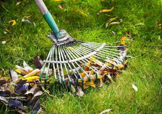 Home exterior cleaning   rake
