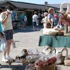 Shipshewana Auction and Flea Market