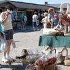 Shipshewana Auction and Flea Market