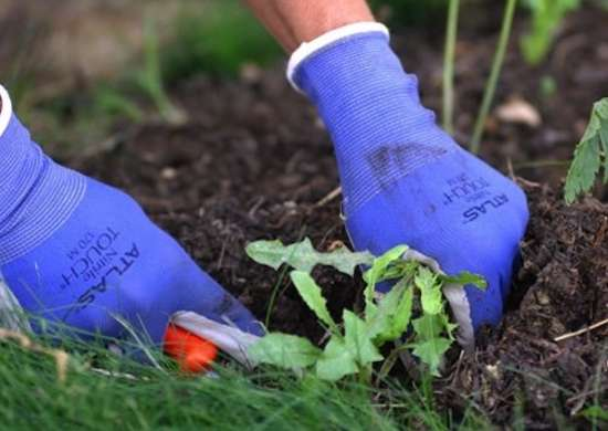 Atlas Nitrile Garden Gloves