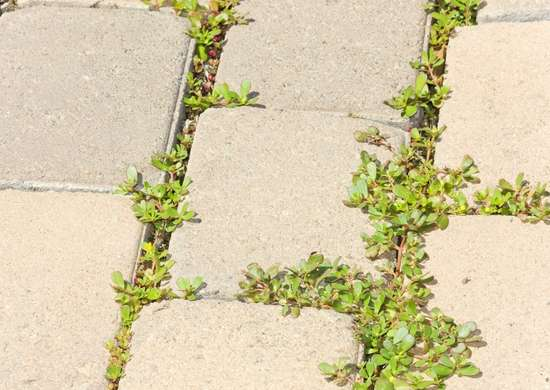 how to get rid of weeds and grow grass