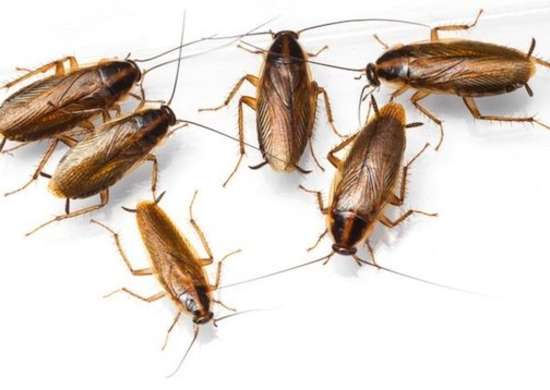 Cockroaches Multiply