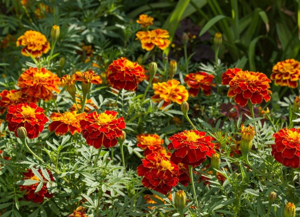 Choose Bug Repellent Plants