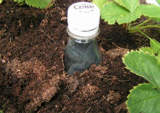 Bury plastic bottle for drip irrigation