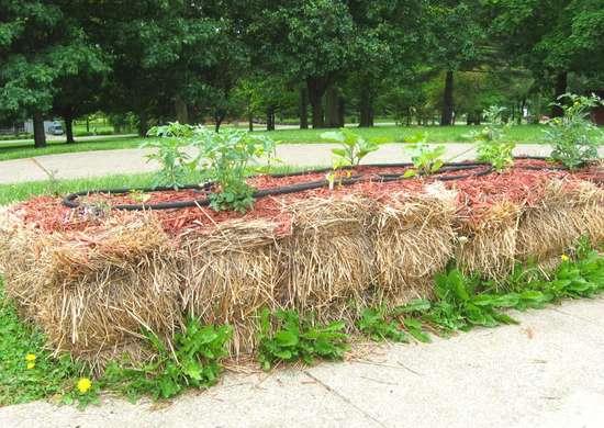 Garden hack   straw bale